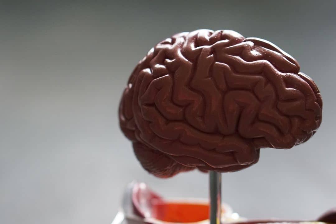 Alzheimer : quelles aides naturelles contre la maladie ?