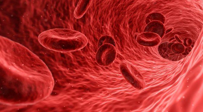 illustration de la circulation des globules rouges dans un vaisseau sanguin