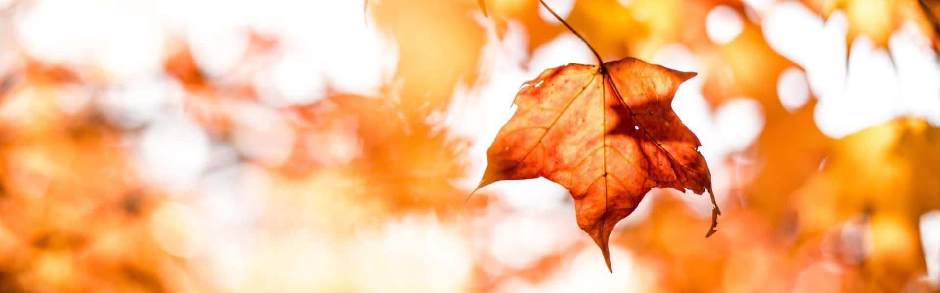 Les promotions Soria Natural pour l'automne